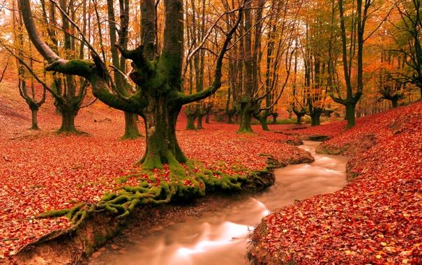 Фото обои осень, лес, деревья, природа, ручей, листва, вечер