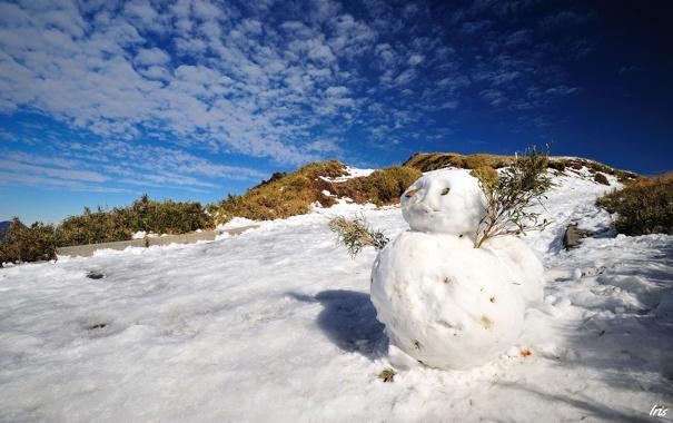 Фото обои зима, снег, ветки, снеговик, солнечно
