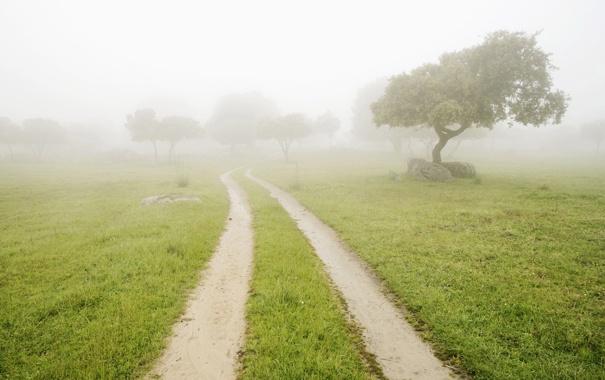 Фото обои дорога, лето, трава, деревья, туман, камни, утро