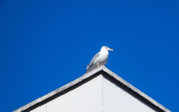 Фото обои крыша, небо, widescreen, обои, чайка, wallpaper, широкоформатные