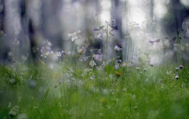Фото обои растения, природа, цветы, макро, боке