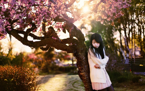 Фото обои девушка, настроение, сакура, азиатка