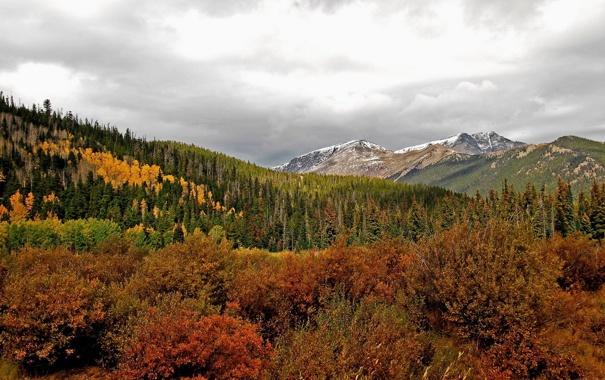 Фото обои деревья, лес, горы, пейзаж, природа
