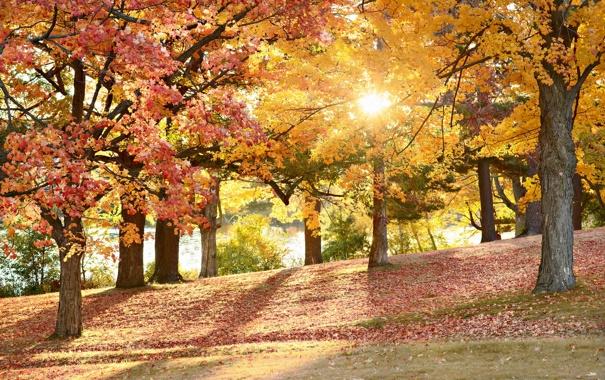 Фото обои осень, деревья, природа