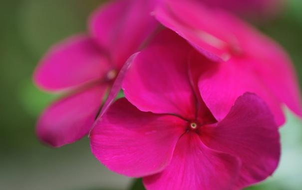 Фото обои цветок, макро, яркий, фокус