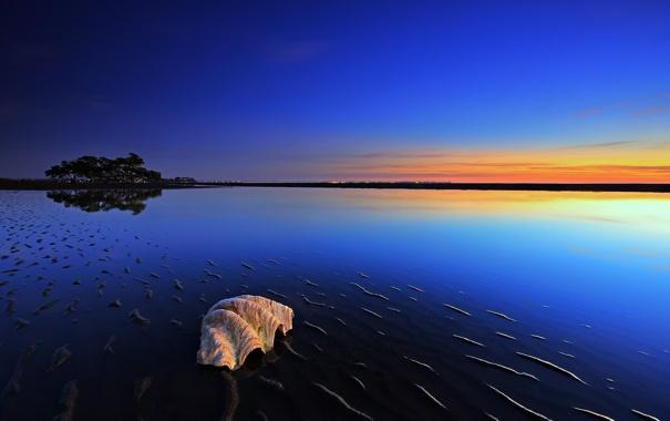 Фото обои море, вода, деревья, природа, фото, океан, пейзажи