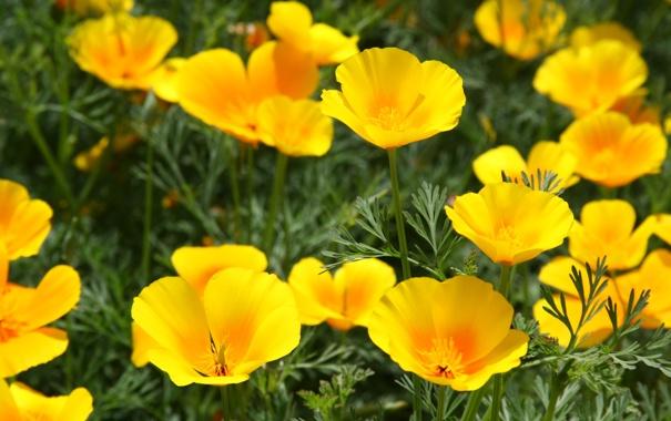 Фото обои лето, макро, цветы, природа, настроение, желтые