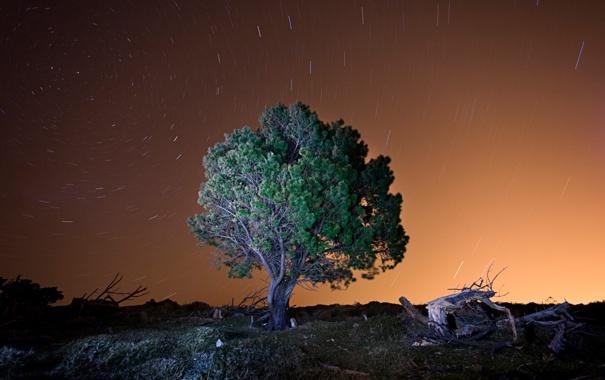 Фото обои небо, звезды, дерево, вечер