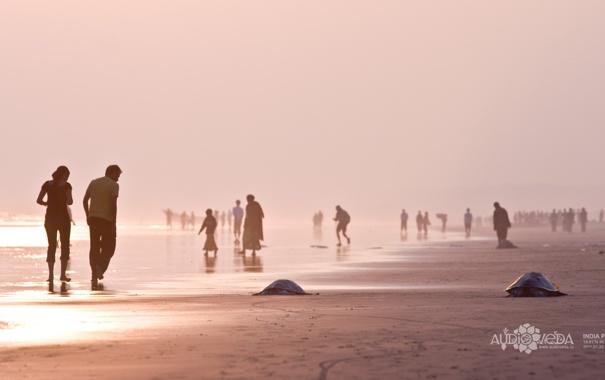 Фото обои море, пляж, утро, черепахи