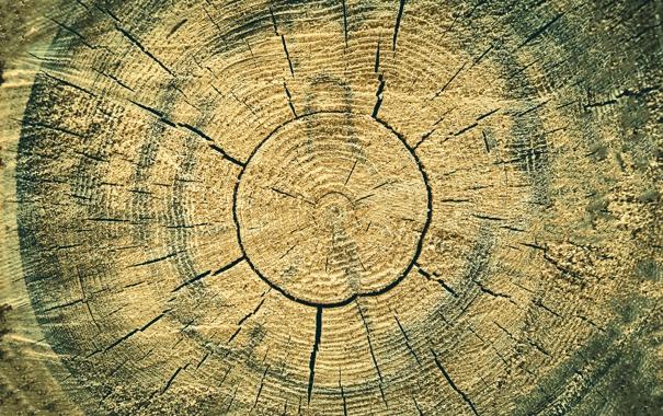 Фото обои трещины, дерево, текстура, кольца
