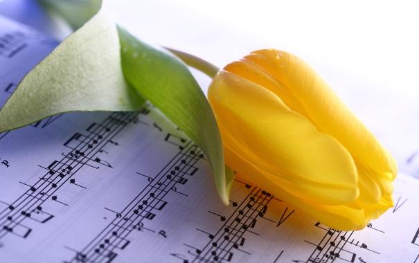 Фото обои желтый, ноты, тюльпан, стебель, бутон, тетрадь, крупным планом