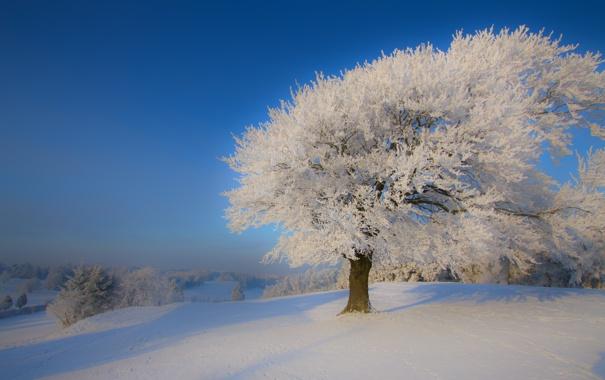Фото обои зима, иней, снег, природа, дерево