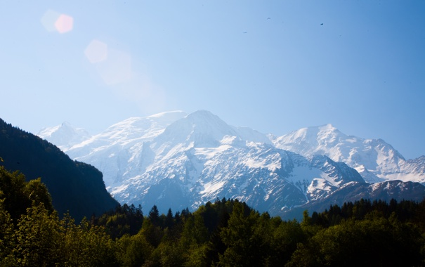 Фото обои лес, небо, горы, птицы