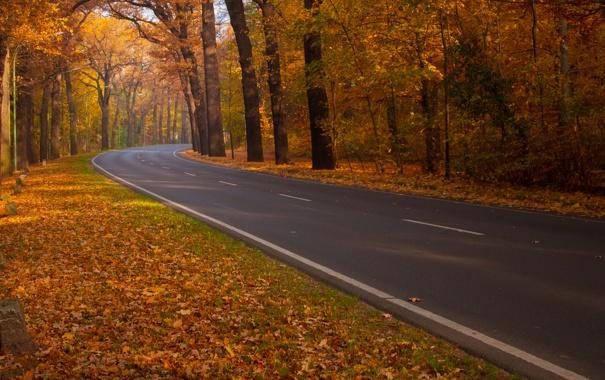 Фото обои дорога, осень, природа