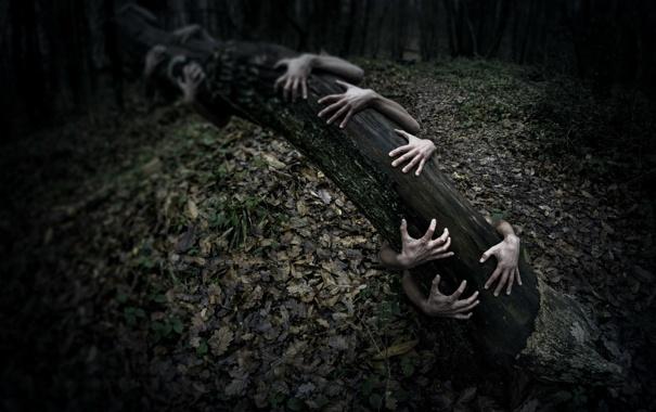 Фото обои дерево, ситуация, руки