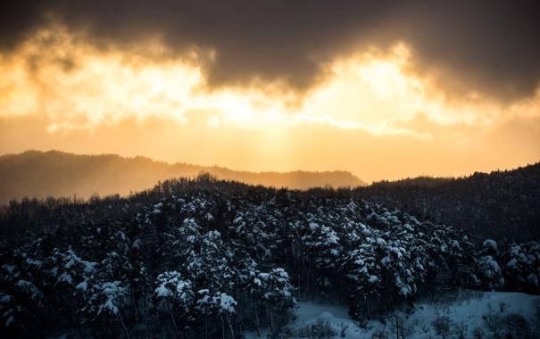 Фото обои зима, лес, небо