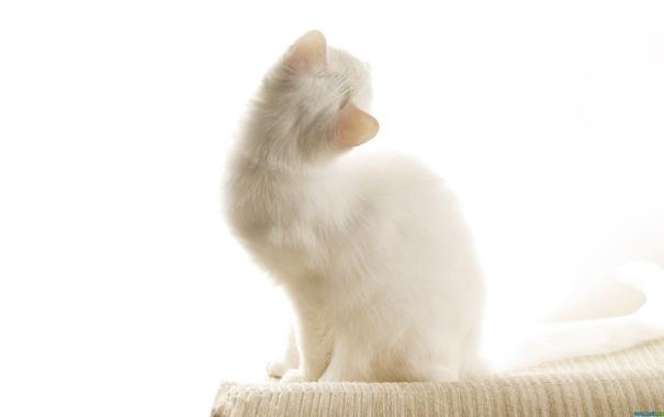 Фото обои кошки, коты, cats