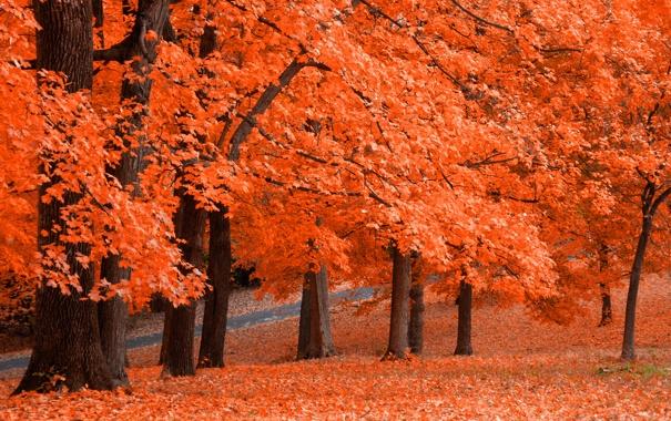 Фото обои осень, листья, парк, оранж, Fresh Squeezed