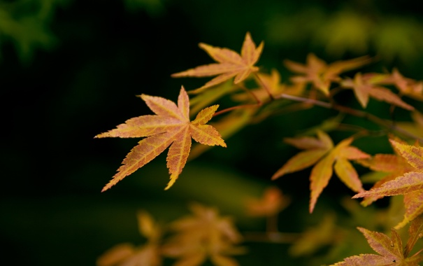 Фото обои природа, осень, ветка, листва