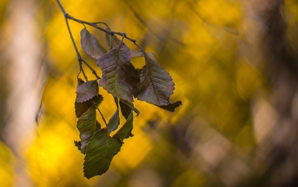Фото обои осень, листья, боке