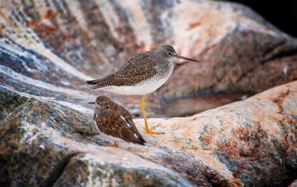 Фото обои птицы, камни, фон, размытость