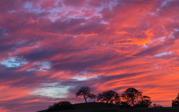 Фото обои небо, облака, деревья, силуэт, холм, зарево