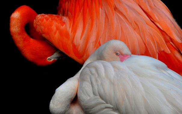 Фото обои птица, краски, перья, клюв, фламинго