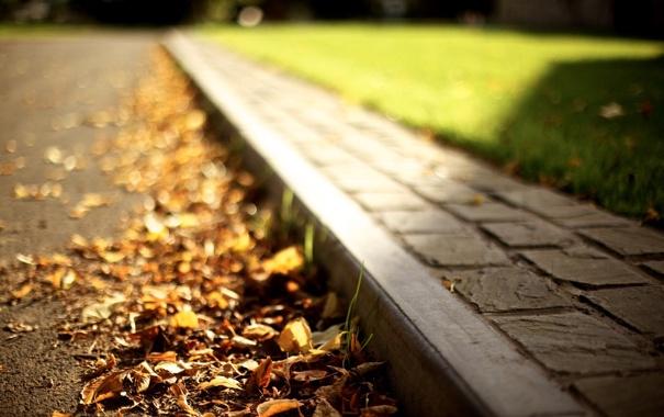 Фото обои дорога, осень, трава, листья, солнце, макро, свет