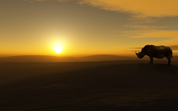 Фото обои небо, солнце, пейзаж, пустыня, носорог