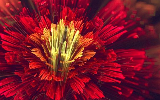 Фото обои цветок, красный, лепестки, арт
