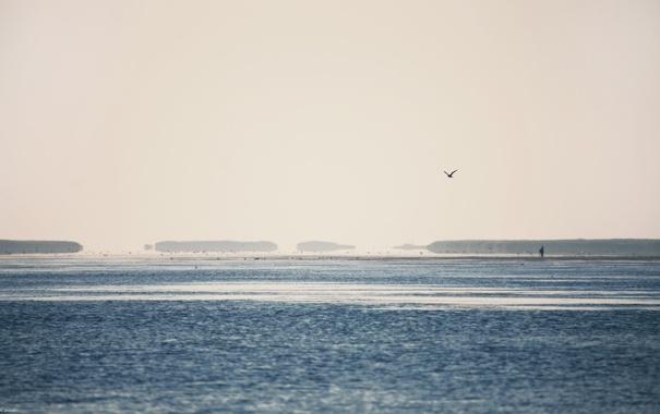 Фото обои море, небо, вода, свет, пейзаж, птицы, природа