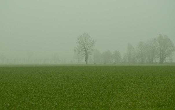 Фото обои зелень, поле, трава, деревья, природа, туман, ветви