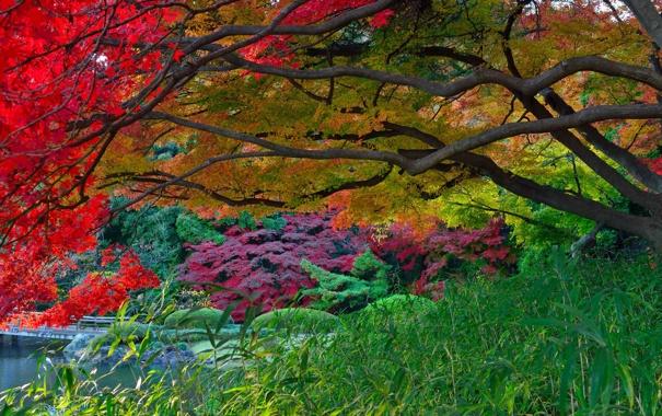 Фото обои осень, листья, деревья, озеро, парк, Япония, сад