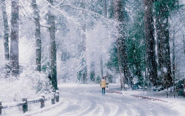 Фото обои зима, дорога, снег, деревья