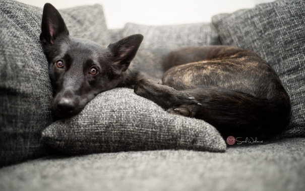 Фото обои взгляд, уют, дом, друг, собака