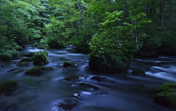 Фото обои лес, река, камни
