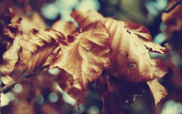 Фото обои осень, листья, макро, природа, сухие, жёлтые