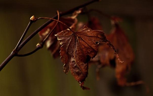 Фото обои макро, лист, ветка, сухой, Декабрь