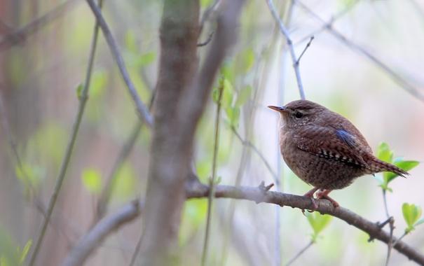 Фото обои листья, природа, дерево, птица, ветка, весна, птичка