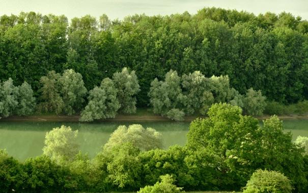 Фото обои лес, деревья, река