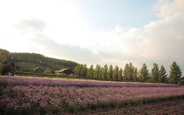 Фото обои поле, цветы, дома