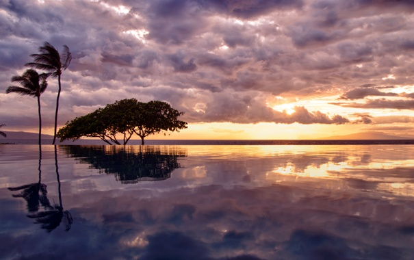 Фото обои облака, бассейн, небо, океан, пальма, вода, дерево