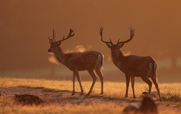 Фото обои осень, природа, олени