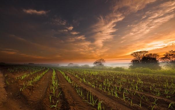 Фото обои поле, небо, облака, туман, утро