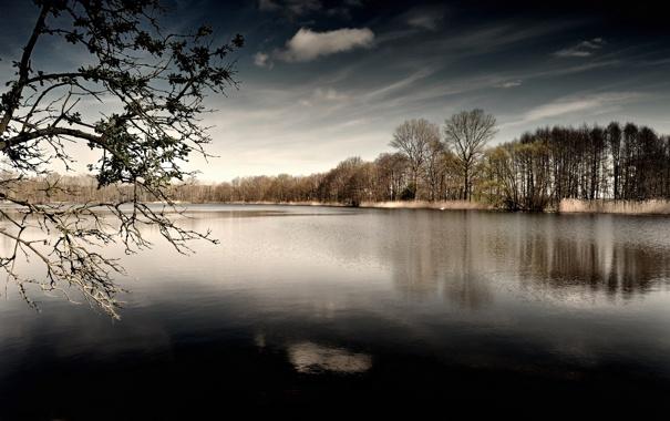Фото обои лес, озеро, рябь
