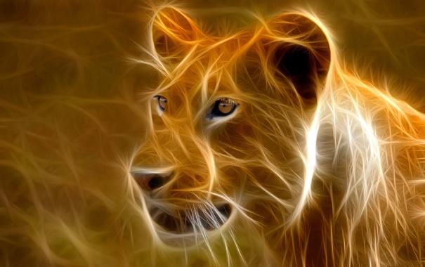 Фото обои кошка, лев, африка, львица, штрих
