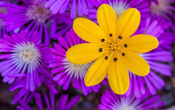 Фото обои макро, природа, растение, лепестки