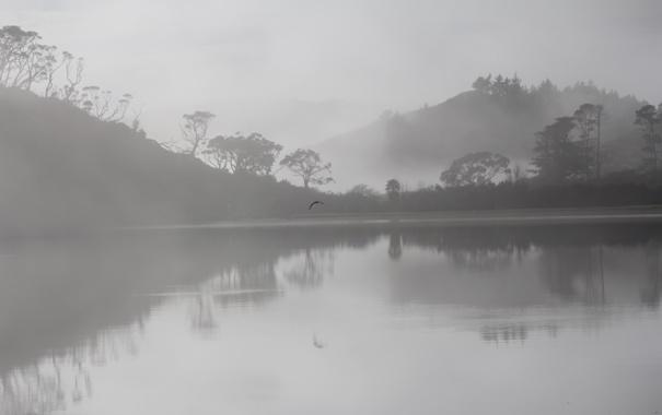 Фото обои деревья, туман, озеро, отражение, холмы, птица