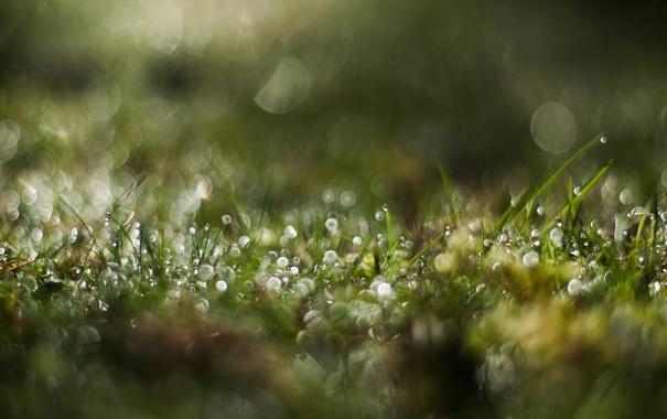 Фото обои трава, зеленый, роса