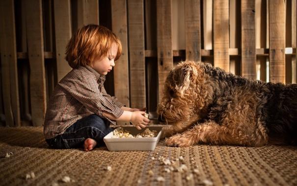 Фото обои еда, собака, мальчик